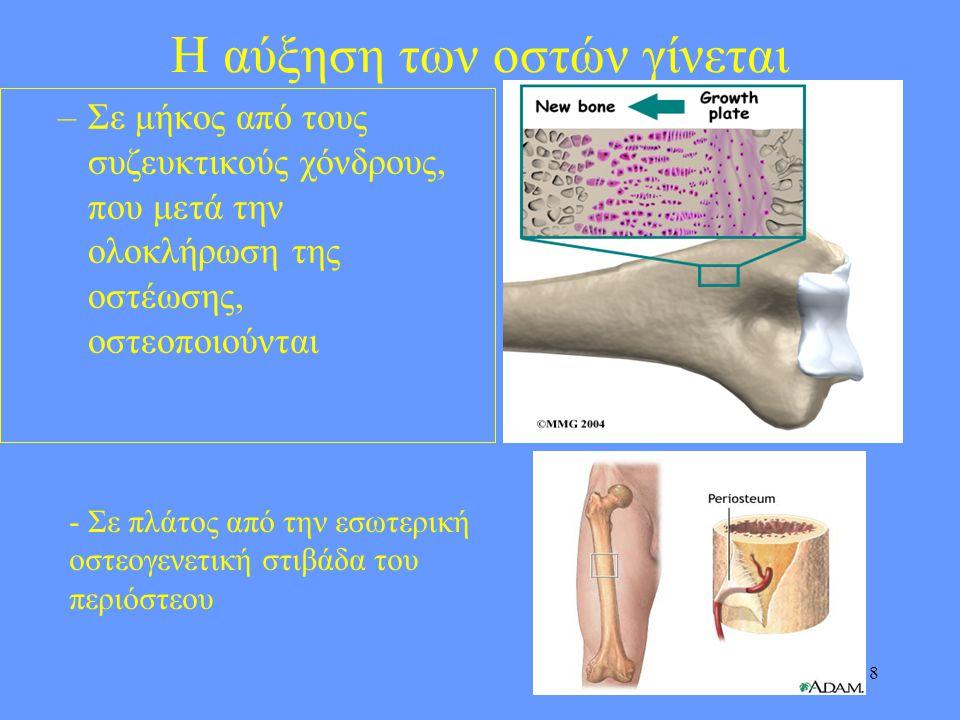 Η αύξηση των οστών γίνεται