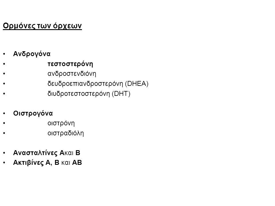 Ορμόνες των όρχεων Ανδρογόνα τεστοστερόνη ανδροστενδιόνη