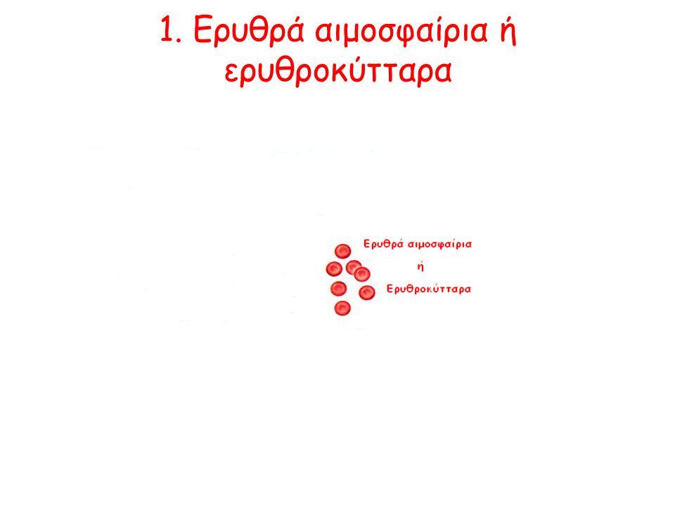 1. Ερυθρά αιμοσφαίρια ή ερυθροκύτταρα