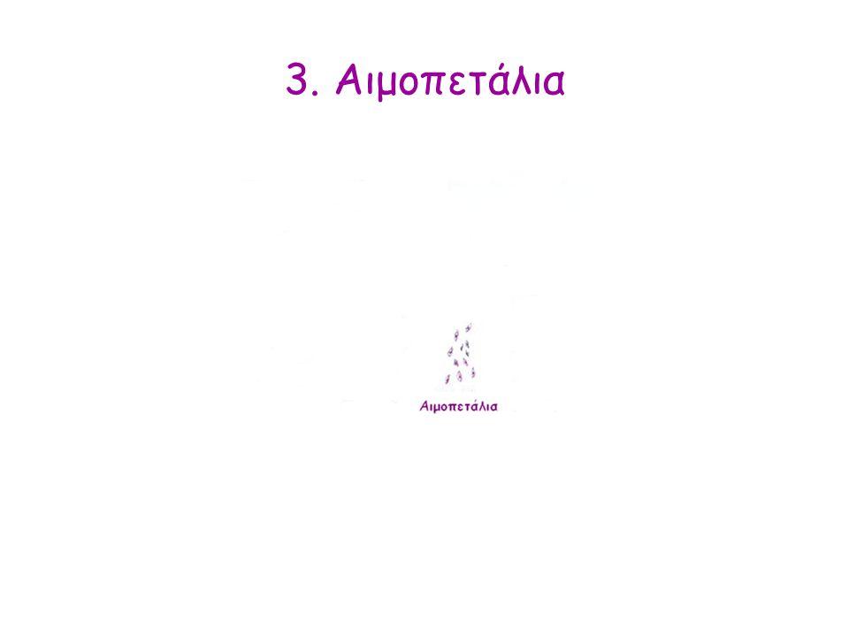 3. Αιμοπετάλια