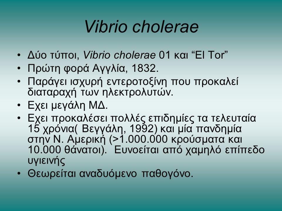 Vibrio cholerae Δύο τύποι, Vibrio cholerae 01 και El Tor