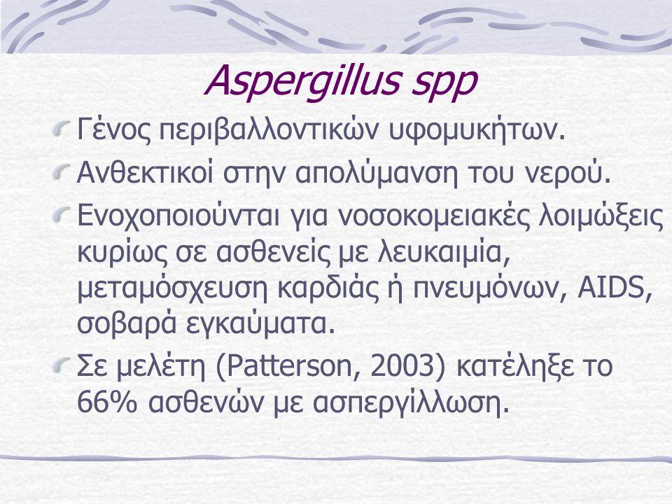 Αspergillus spp Γένος περιβαλλοντικών υφομυκήτων.