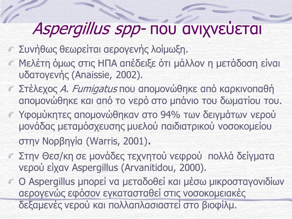 Αspergillus spp- που ανιχνεύεται