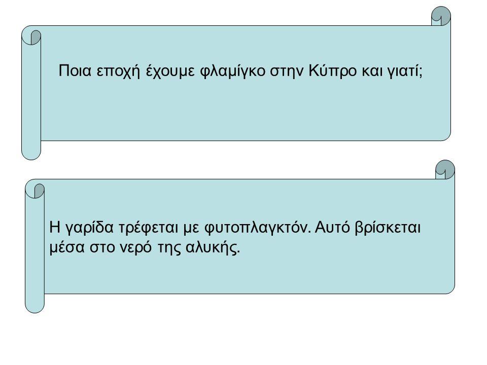 Ποια εποχή έχουμε φλαμίγκο στην Κύπρο και γιατί;