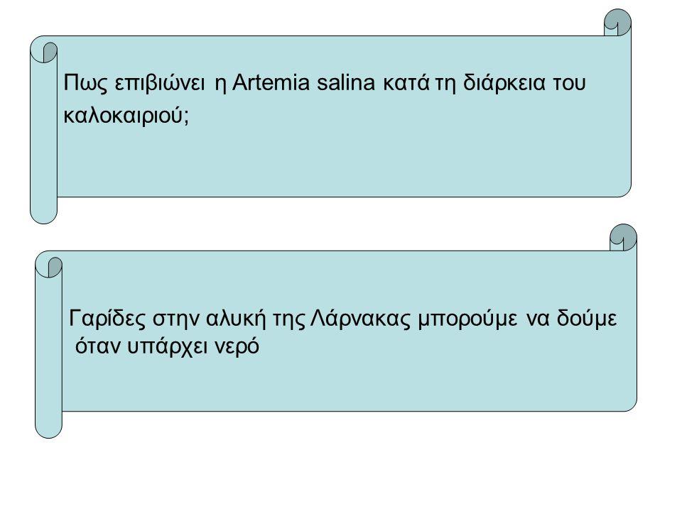 Πως επιβιώνει η Artemia salina κατά τη διάρκεια του