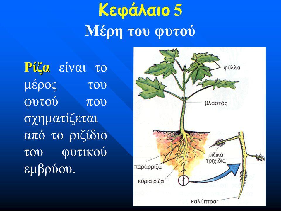 Κεφάλαιο 5 Μέρη του φυτού
