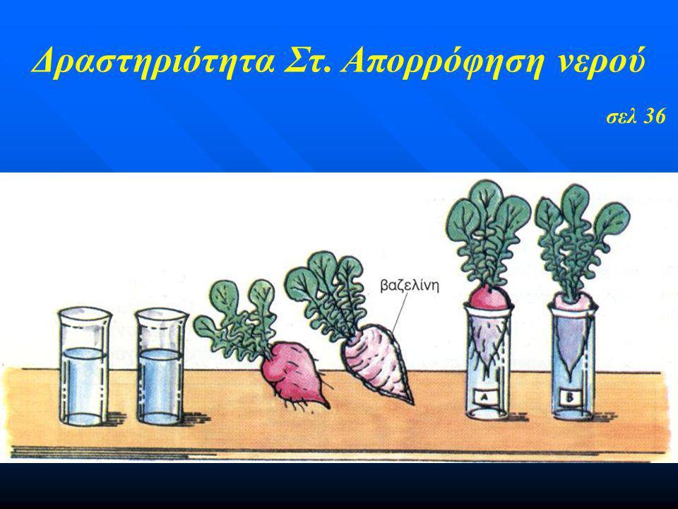 Δραστηριότητα Στ. Απορρόφηση νερού