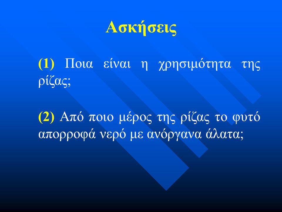 Ασκήσεις (1) Ποια είναι η χρησιμότητα της ρίζας;