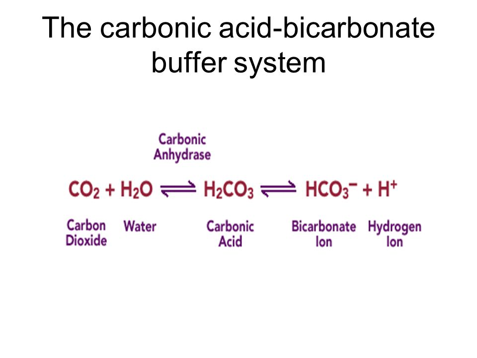The carbonic acid-bicarbonate buffer system