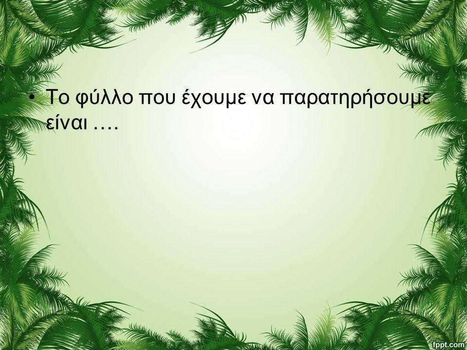 Το φύλλο που έχουμε να παρατηρήσουμε είναι ….