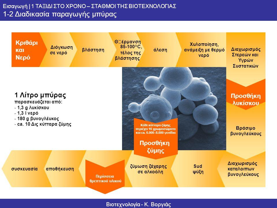 Κάθε κύτταρο ζύμης περιέχει 16 χρωμοσώματα και ca. 6.000–8.000 γονίδια