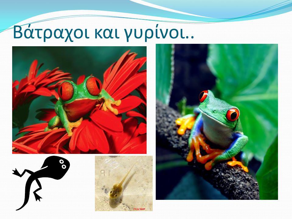 Βάτραχοι και γυρίνοι..