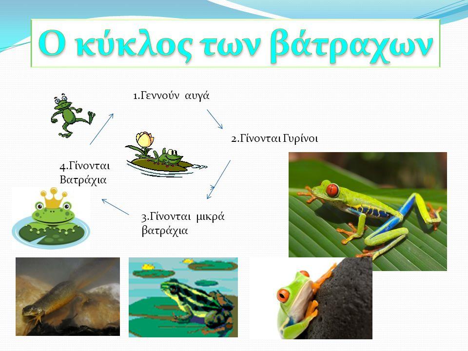Ο κύκλος των βάτραχων 1.Γεννούν αυγά 2.Γίνονται Γυρίνοι