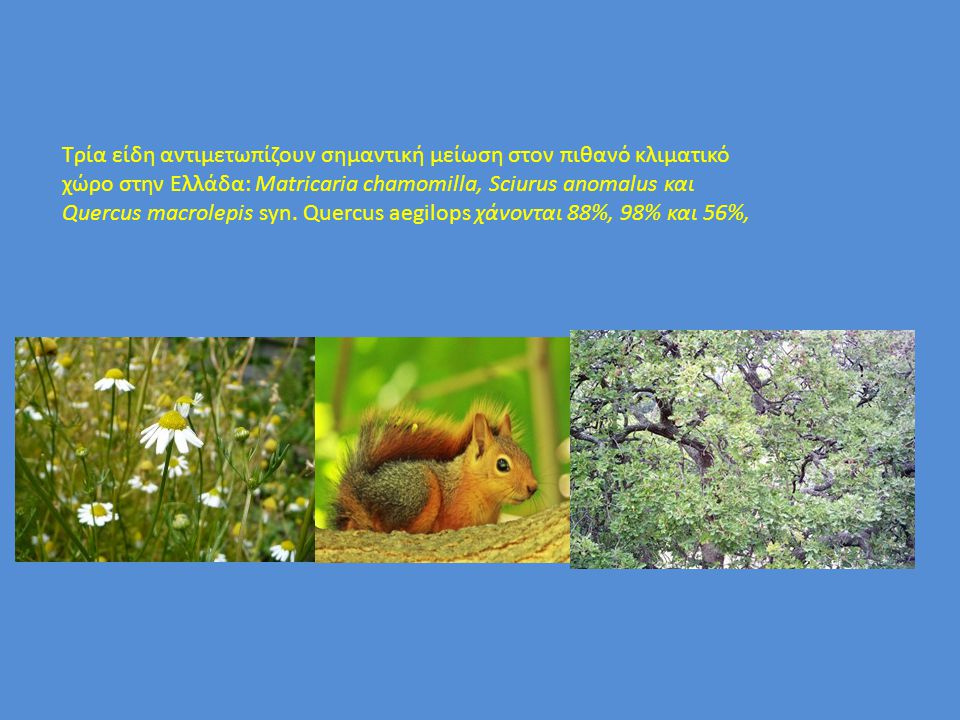 Τρία είδη αντιμετωπίζουν σημαντική μείωση στον πιθανό κλιματικό χώρο στην Ελλάδα: Matricaria chamomilla, Sciurus anomalus και Quercus macrolepis syn.