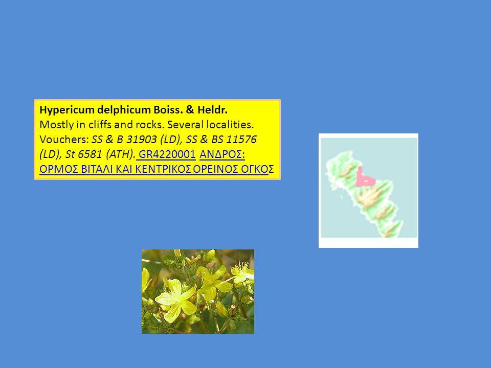 Hypericum delphicum Boiss. & Heldr.