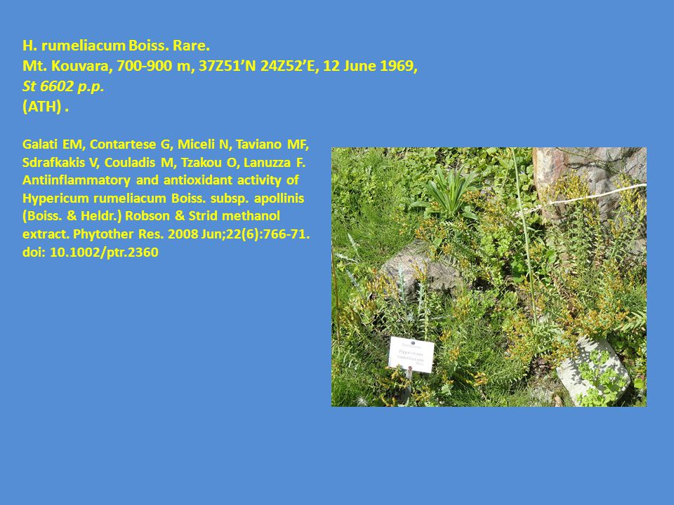 H. rumeliacum Boiss. Rare.