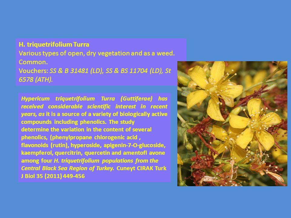 H. triquetrifolium Turra