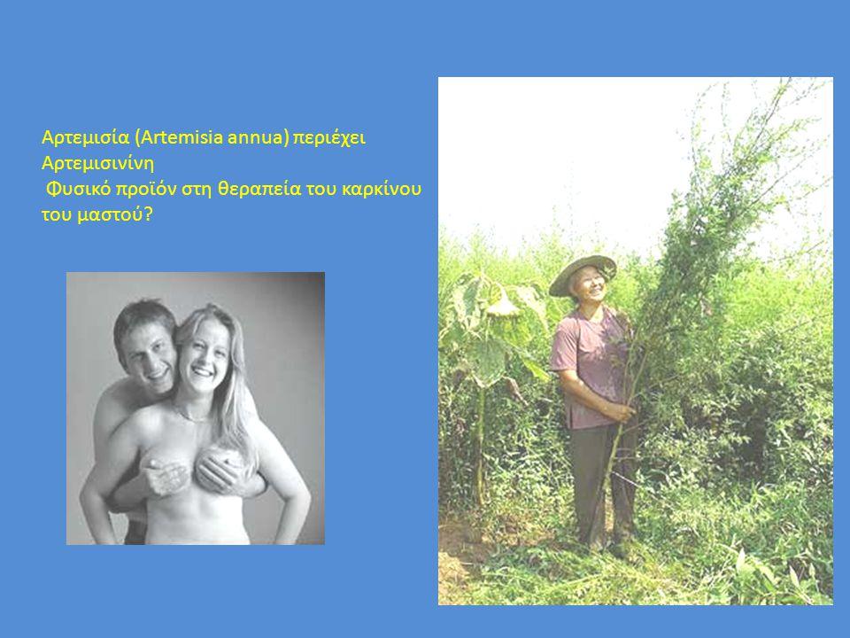 Αρτεμισία (Artemisia annua) περιέχει Αρτεμισινίνη Φυσικό προϊόν στη θεραπεία του καρκίνου του μαστού