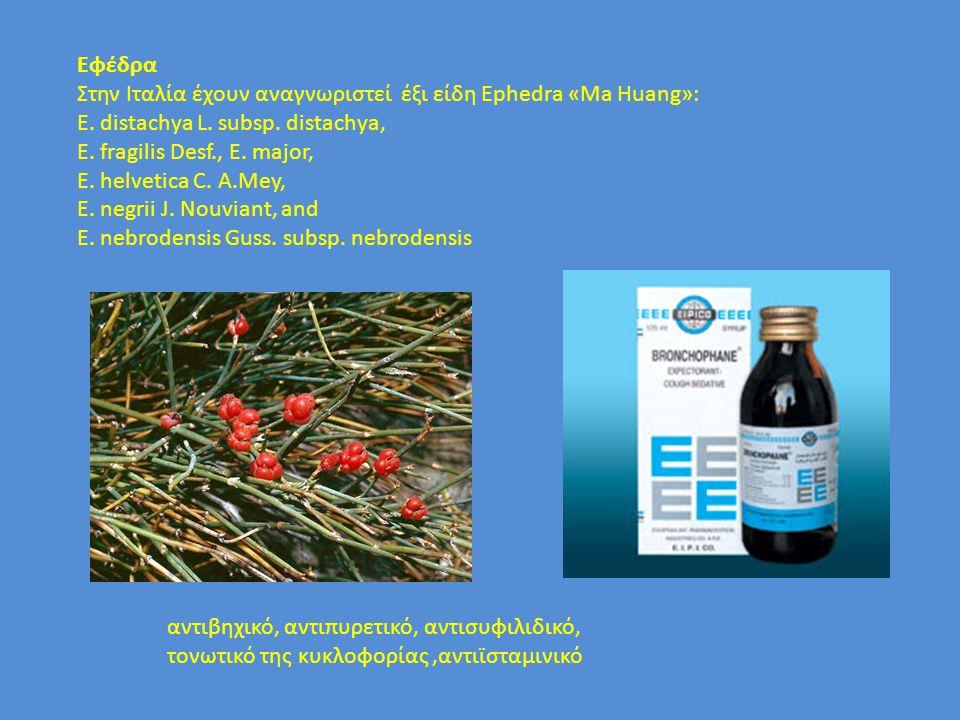 Eφέδρα Στην Ιταλία έχουν αναγνωριστεί έξι είδη Ephedra «Ma Huang»: E. distachya L. subsp. distachya,