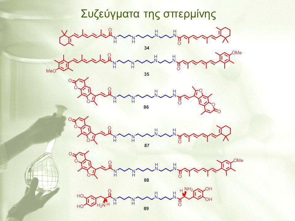 Συζεύγματα της σπερμίνης
