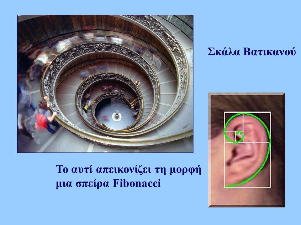 Σκάλα Βατικανού Το αυτί απεικονίζει τη μορφή μια σπείρα Fibonacci