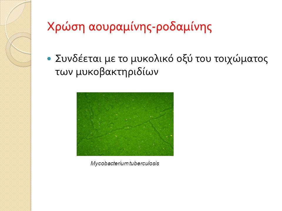 Χρώση αουραμίνης-ροδαμίνης