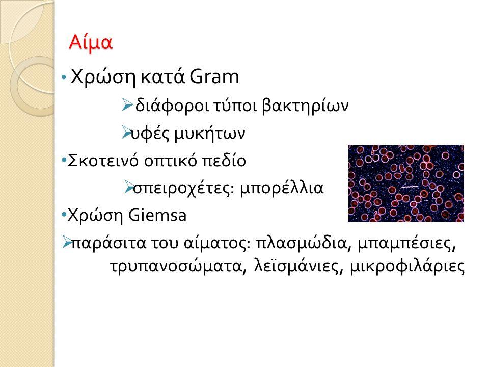 Αίμα Χρώση κατά Gram διάφοροι τύποι βακτηρίων υφές μυκήτων