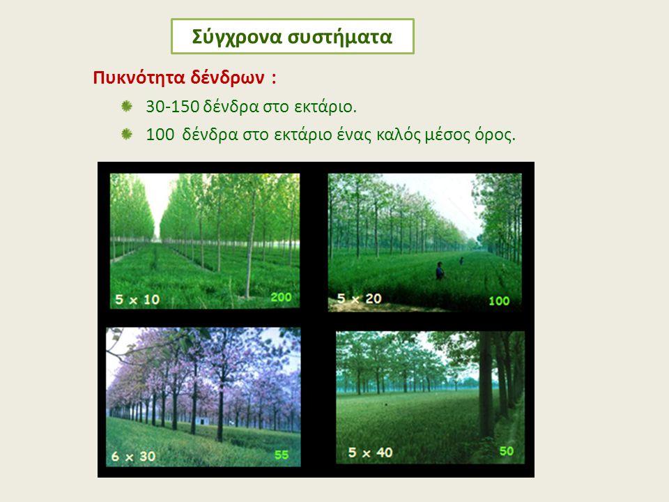 Σύγχρονα συστήματα Πυκνότητα δένδρων : 30-150 δένδρα στο εκτάριο.