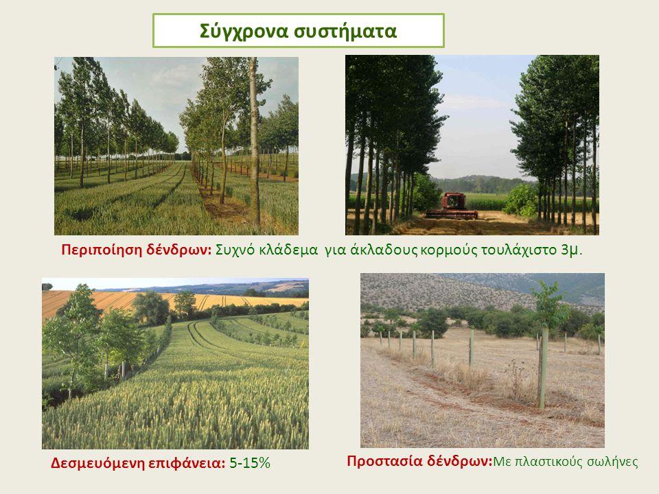Σύγχρονα συστήματα Περιποίηση δένδρων: Συχνό κλάδεμα για άκλαδους κορμούς τουλάχιστο 3μ. Προστασία δένδρων:Με πλαστικούς σωλήνες.