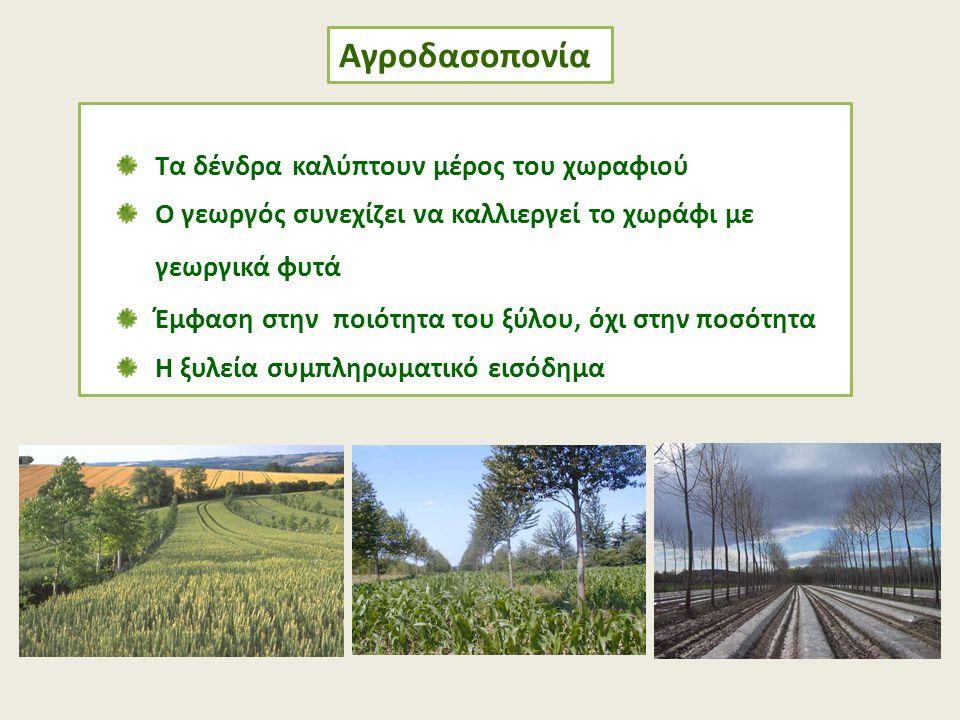 Αγροδασοπονία Τα δένδρα καλύπτουν μέρος του χωραφιού