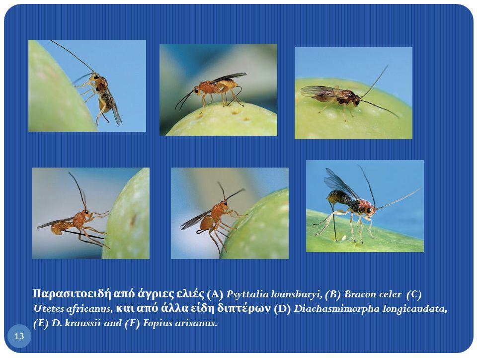 Παρασιτοειδή από άγριες ελιές (A) Psyttalia lounsburyi, (B) Bracon celer (C) Utetes africanus, και από άλλα είδη διπτέρων (D) Diachasmimorpha longicaudata, (E) D.