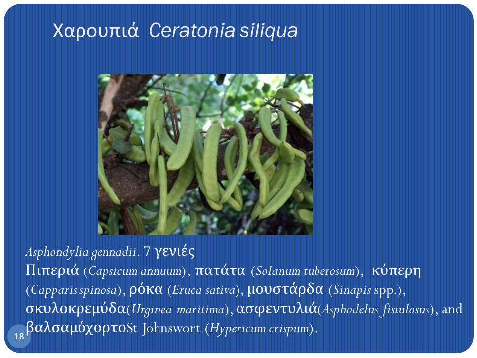 Χαρουπιά Ceratonia siliqua