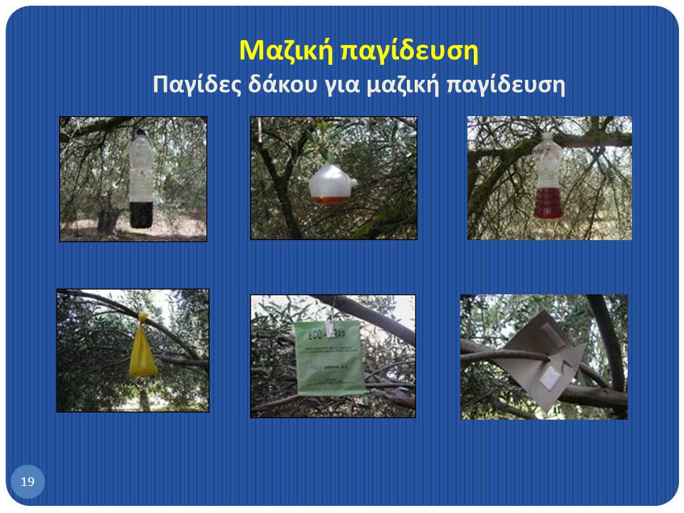 Μαζική παγίδευση Παγίδες δάκου για μαζική παγίδευση