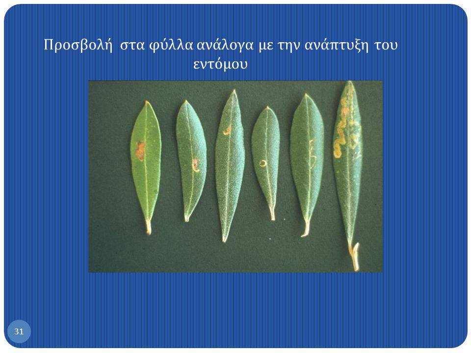 Προσβολή στα φύλλα ανάλογα με την ανάπτυξη του εντόμου