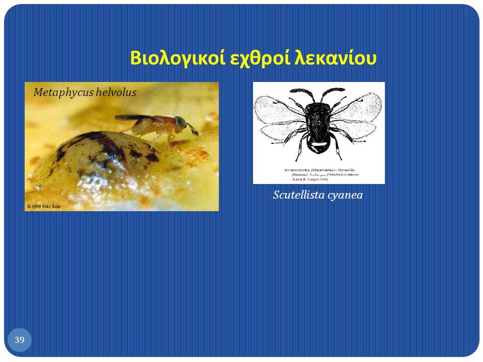 Βιολογικοί εχθροί λεκανίου