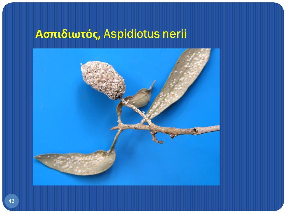 Ασπιδιωτός, Aspidiotus nerii
