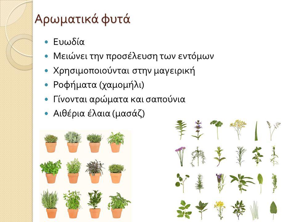 Αρωματικά φυτά Ευωδία Μειώνει την προσέλευση των εντόμων