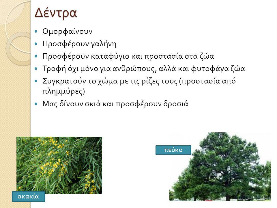 Δέντρα Ομορφαίνουν Προσφέρουν γαλήνη
