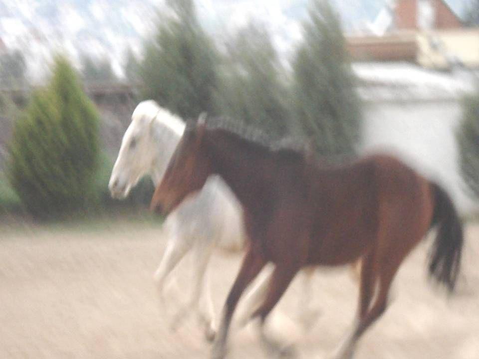 Aυτά είναι τα δυο συγκεκριμένα άλογα (ο Ράδος και ο Μάρκος) που χρησιμοποιούμε στο πρόγραμμα θεραπευτικής ιππασίας που υλοποιούμε στο Βόλο με μια Μη Κυβερνητική Μη Κερδοσκοπική Οργάνωση που ονομάζεται Πολίτροπο.