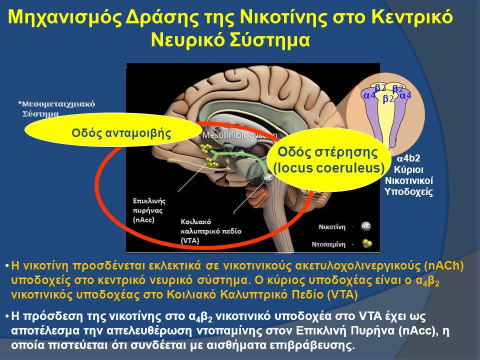 Μηχανισμός Δράσης της Νικοτίνης στο Κεντρικό Νευρικό Σύστημα