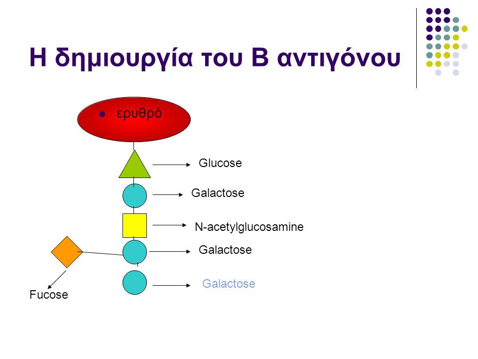 Η δημιουργία του Β αντιγόνου