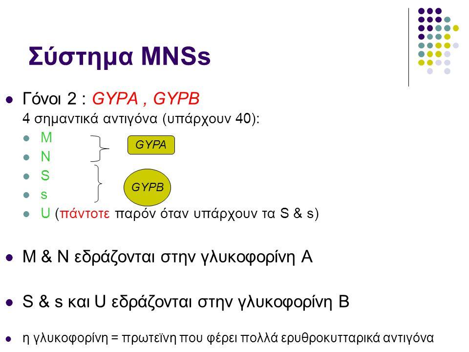 Σύστημα ΜΝSs Γόνοι 2 : GYPA , GYPB M & N εδράζονται στην γλυκοφορίνη Α