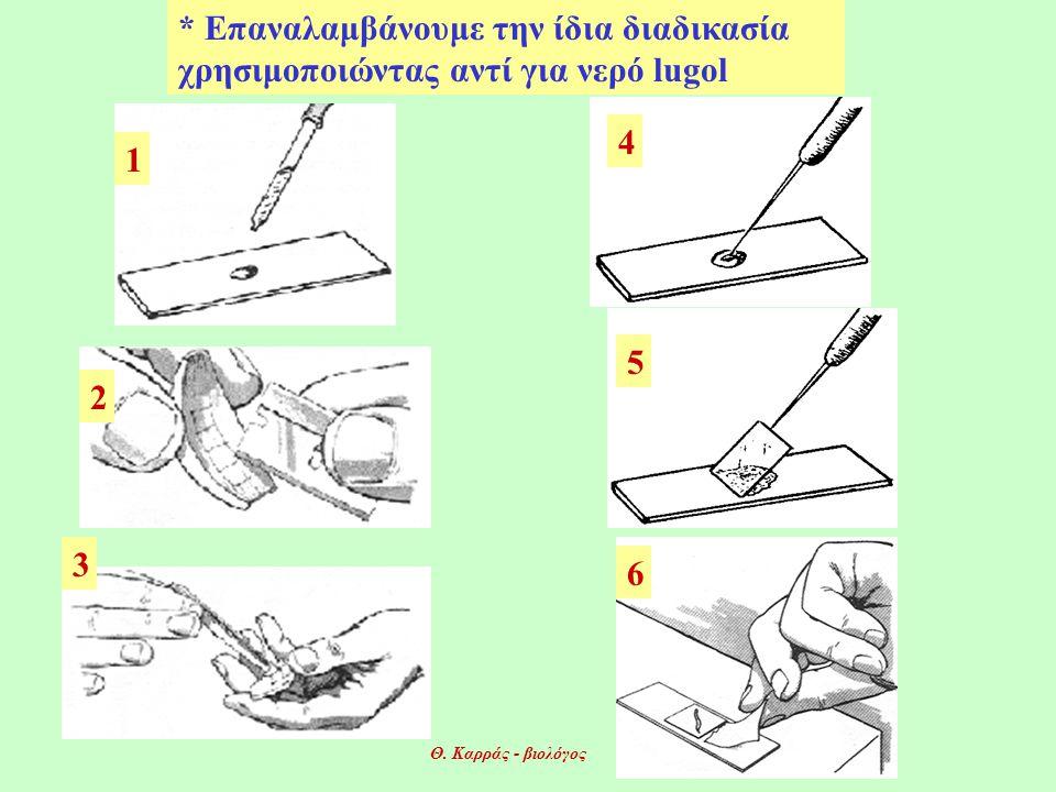 * Επαναλαμβάνουμε την ίδια διαδικασία χρησιμοποιώντας αντί για νερό lugol