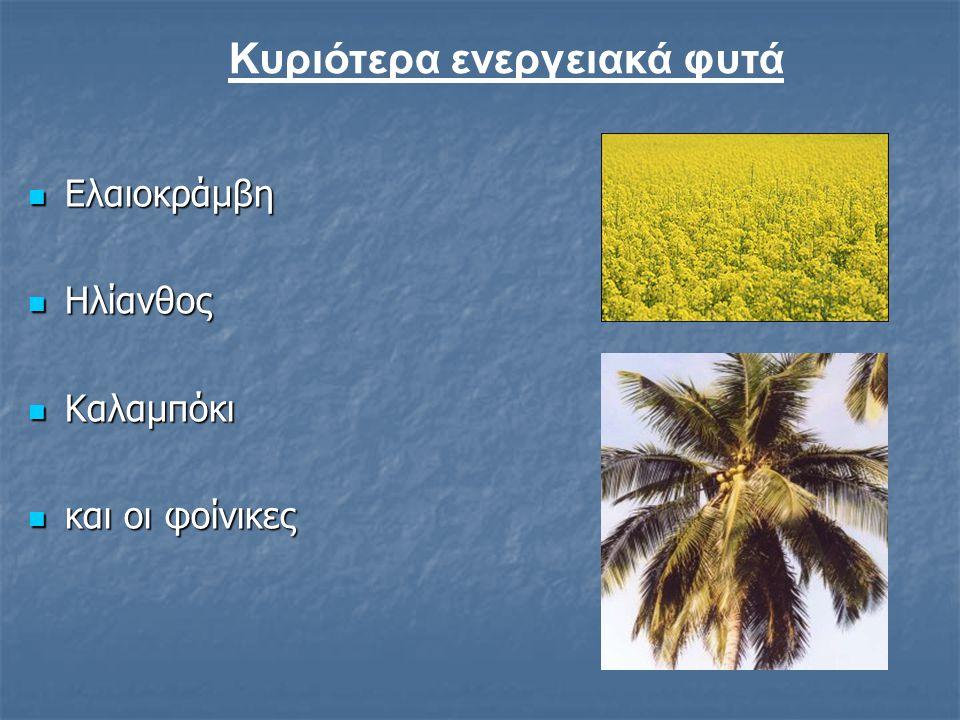 Κυριότερα ενεργειακά φυτά