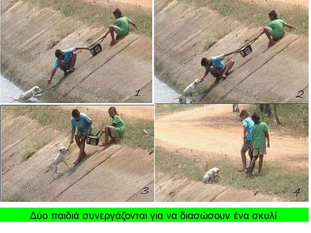 Δύο παιδιά συνεργάζονται για να διασώσουν ένα σκυλί