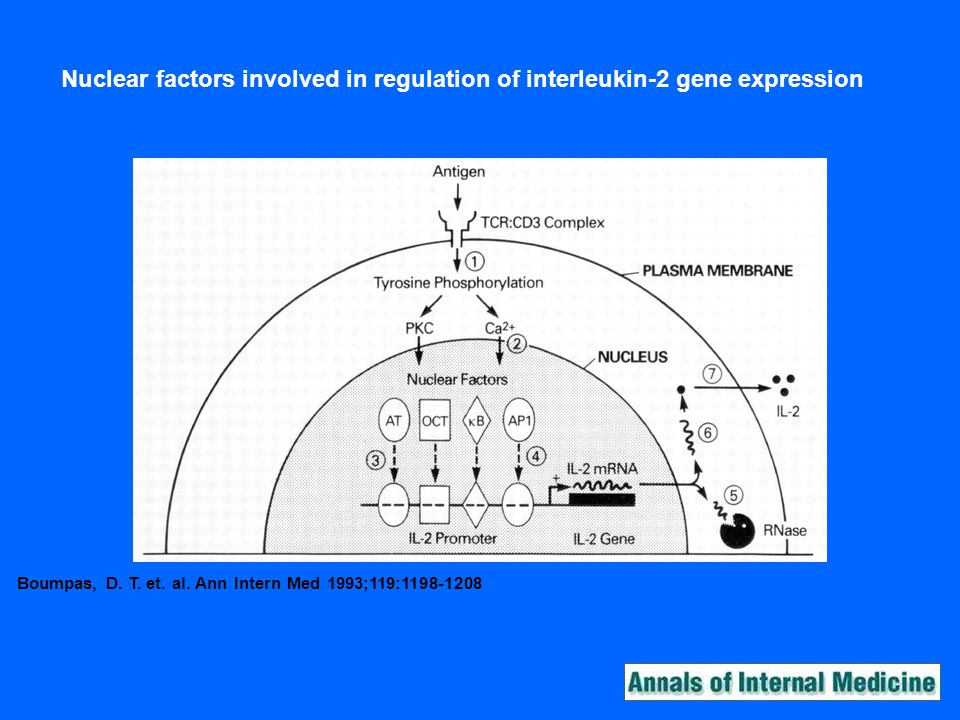 Nuclear factors involved in regulation of interleukin-2 gene expression