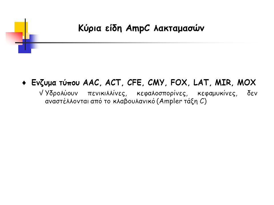 Κύρια είδη AmpC λακταμασών