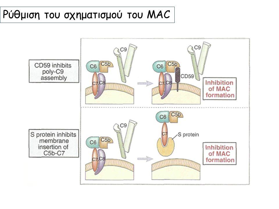 Ρύθμιση του σχηματισμού του MAC