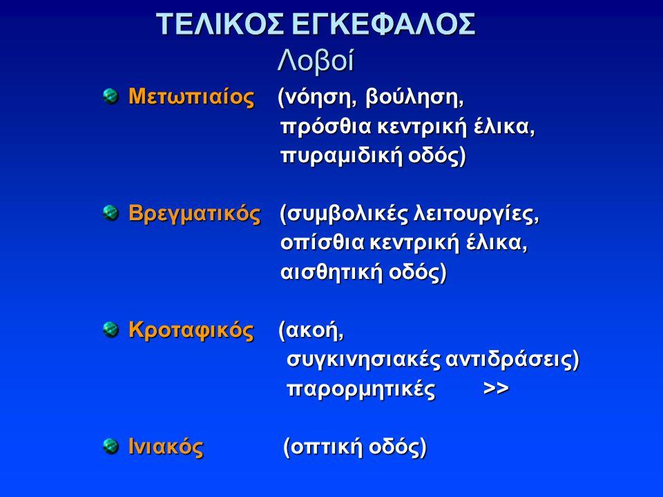 ΤΕΛΙΚΟΣ ΕΓΚΕΦΑΛΟΣ Λοβοί