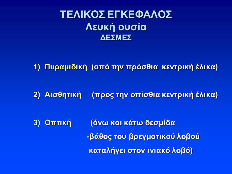 ΤΕΛΙΚΟΣ ΕΓΚΕΦΑΛΟΣ Λευκή ουσία ΔΕΣΜΕΣ